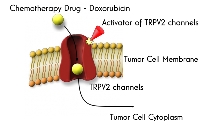 Revolucionando la quimioterapia
