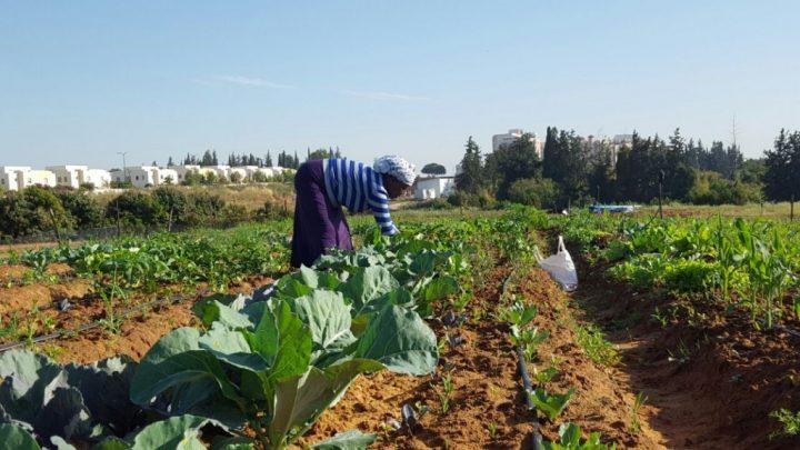 Los etíopes traen tradiciones agrícolas al campus universitario