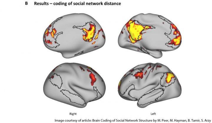 El aislamiento social y nuestro cerebro